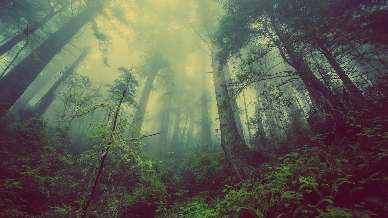 Záhadný les