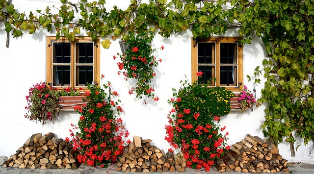 okna staršího domu s květinami.jpg